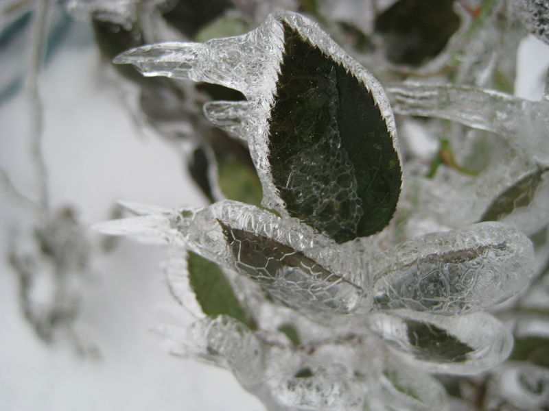 WinterIceStorm2008df