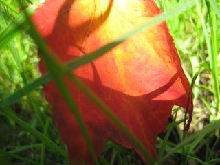 Lawn leaf