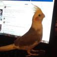 FatBird